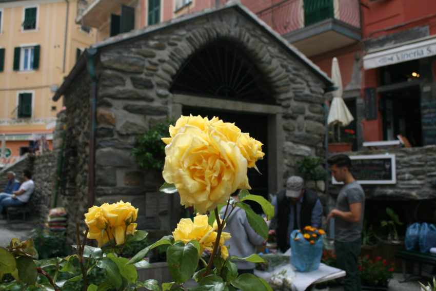 Yellow roses in flower market.