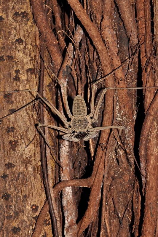 Afraid of spiders? Don't go down Rio Secreto.