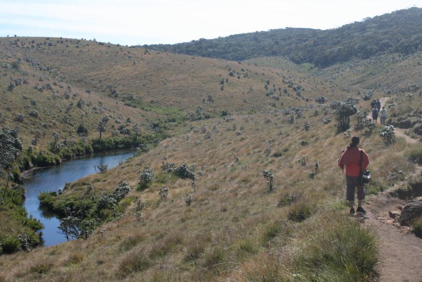 The path through some of the grasslands of Horton Plains National Park.