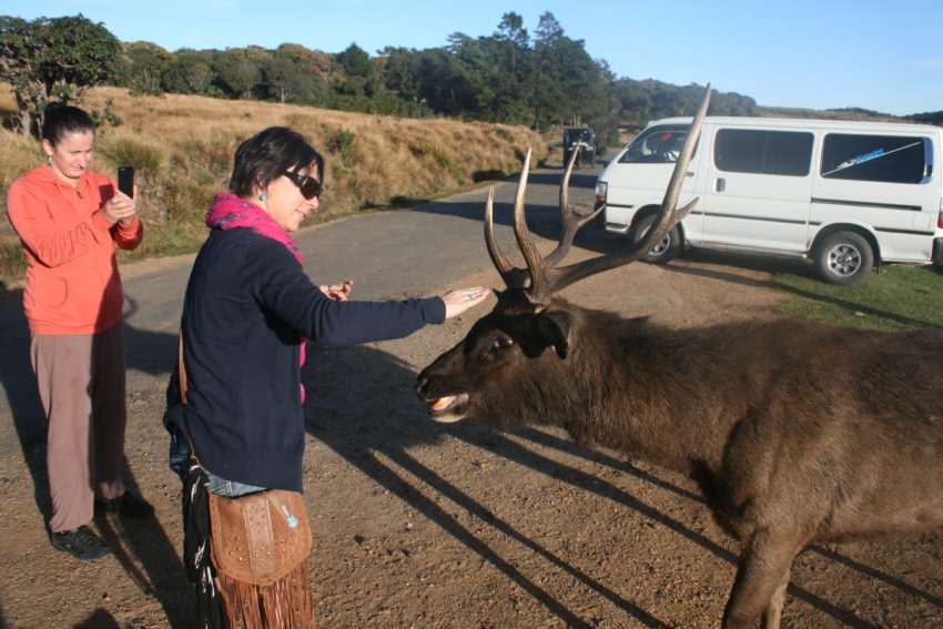Jana and the sambar deer.
