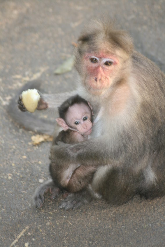 This monkey and her baby greeted me on the street at the end of the trip.