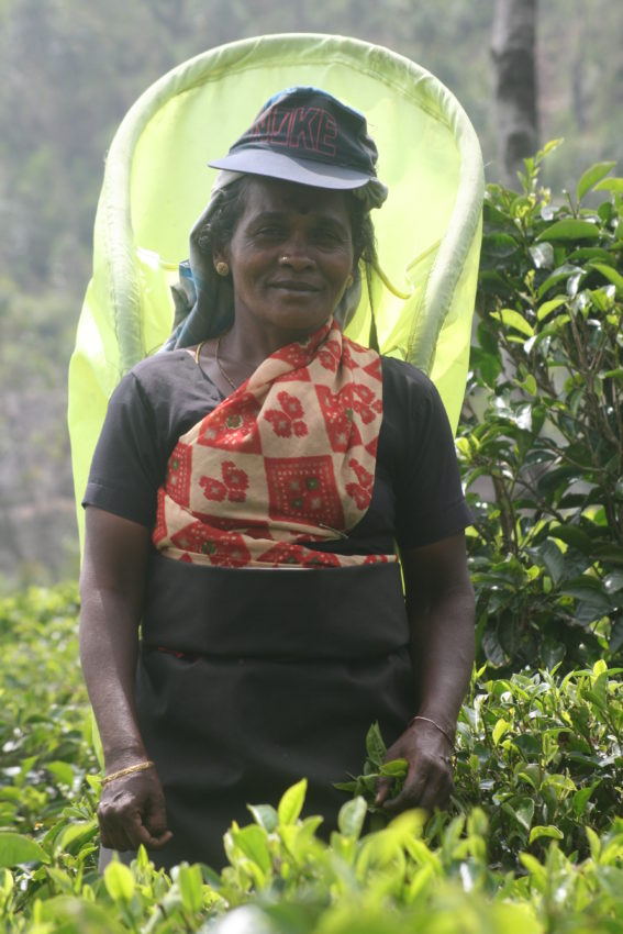 Tea picker black