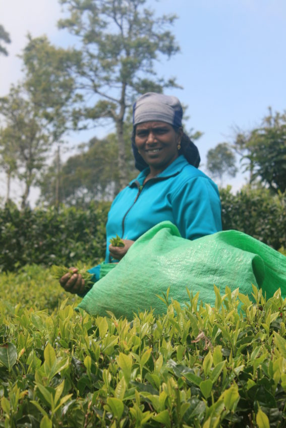 Tea picker smile