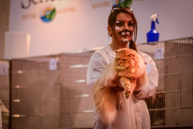 Halloween night was the kickoff for a cat show that featured 800 cats and hosted about 30,000 visitors.