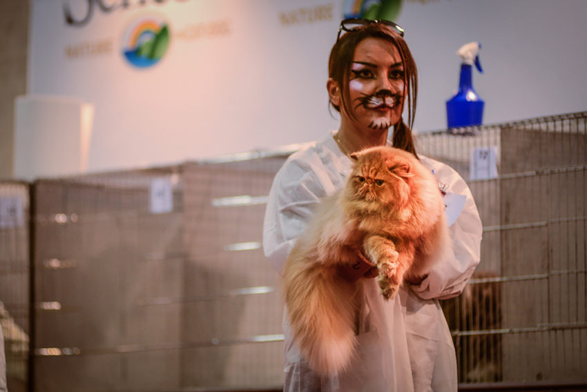 On Halloween night, Rome's SuperCat Show featured 800 cats and 30,000 guests over a two-day period. Photo by Marina Pascucci.