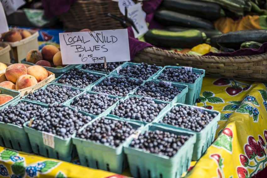 Maine produces 90 percent of the world's wild blueberries. Photo by Marina Pascucci